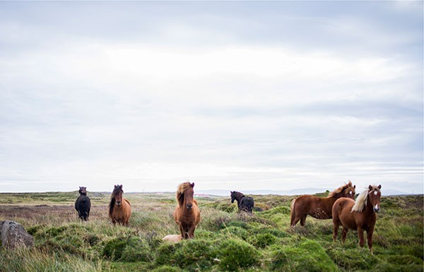 Horses_Murite_thumbnail